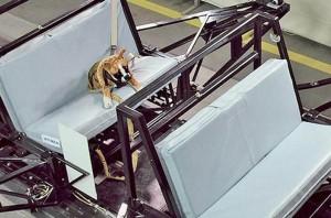 pet safety testing